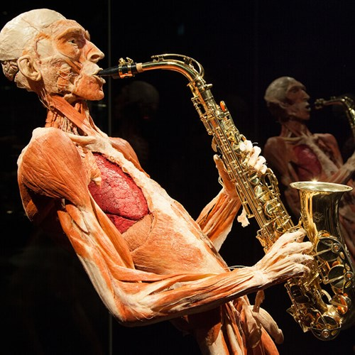 002a_attractions_tt_bodyworlds1.jpg